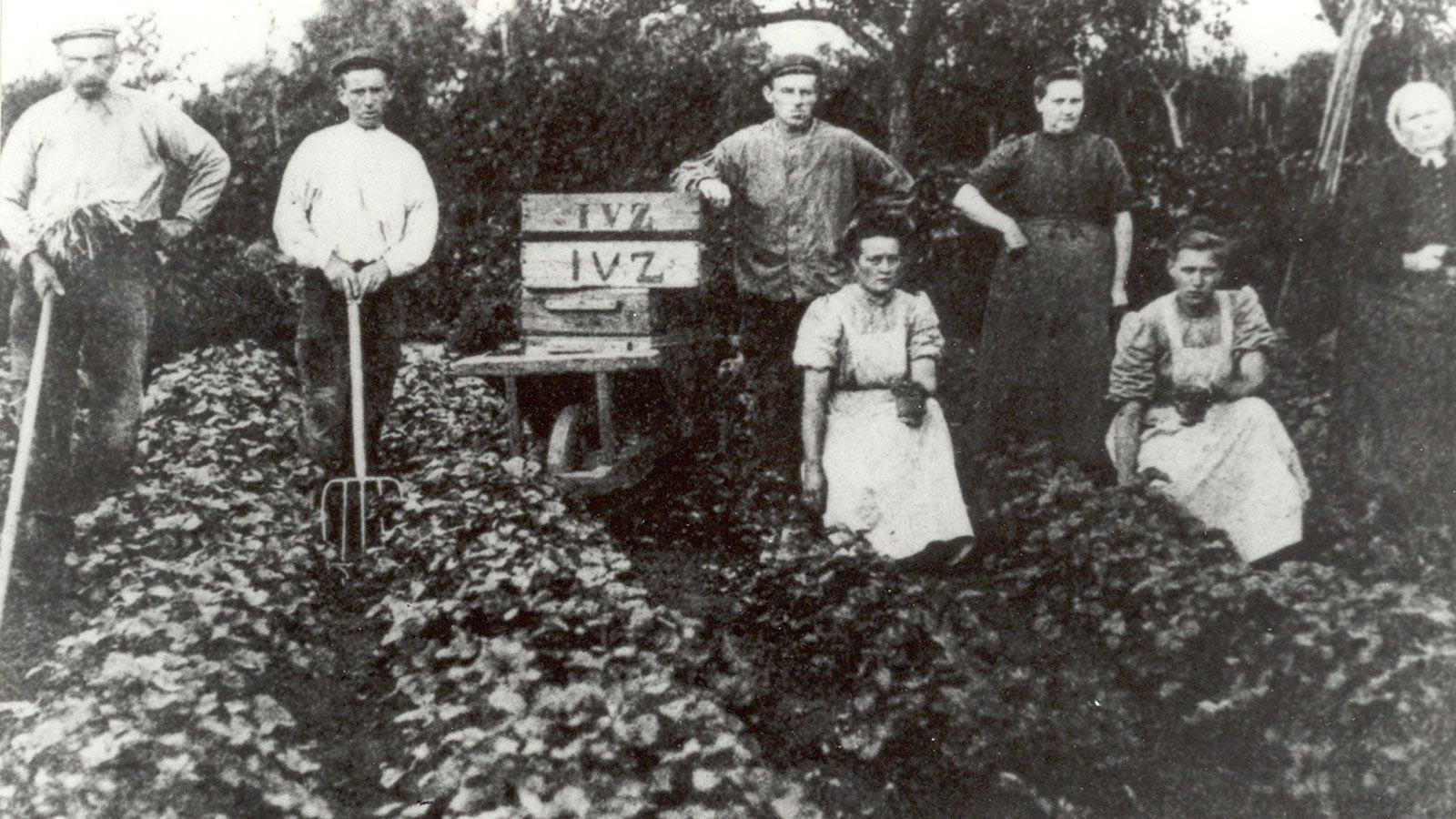 Aardbeienplukkers van de Fa. I. van Zijverden - Historische Tuin Aalsmeer - Een levend museum