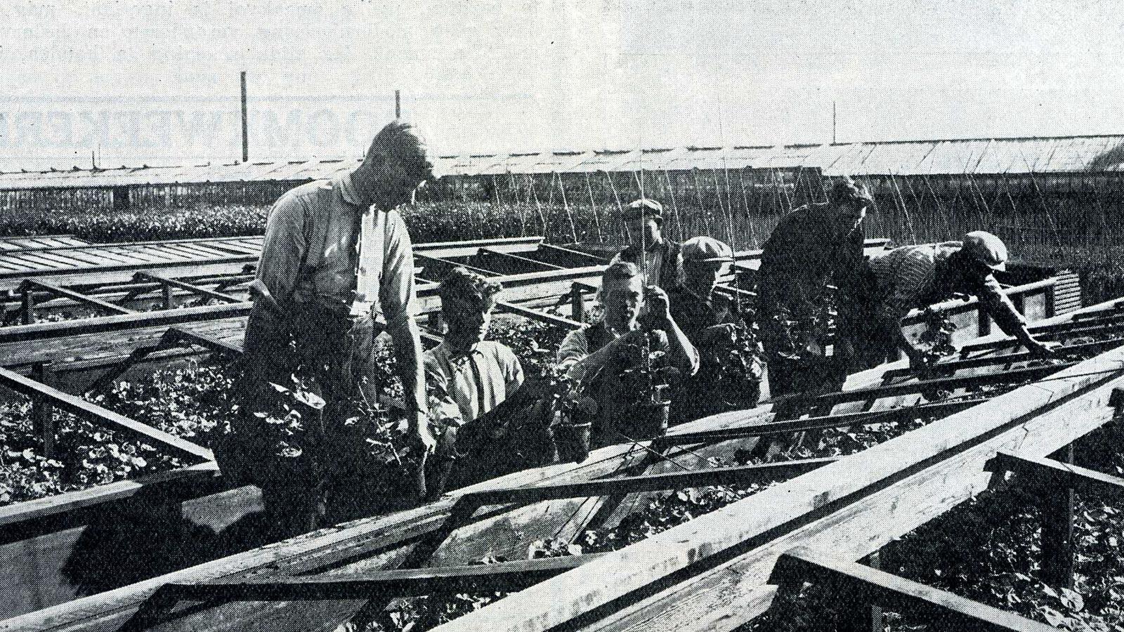 Koop Maarse - einde Uiterweg rond 1928 - Historische Tuin Aalsmeer - Een levend museum